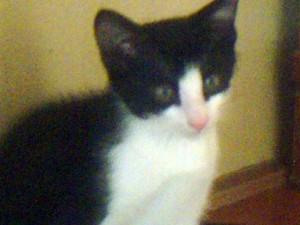 子猫は生後3~4ヶ月位